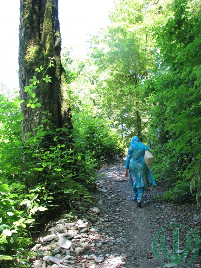 Саркалате. Заповедный лес