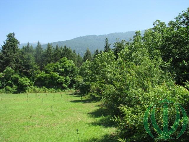 Дальше только лес