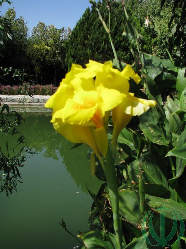 В Саду Цветов