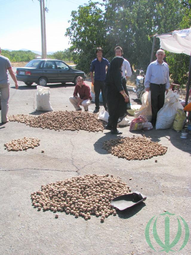 Торговля орехами.